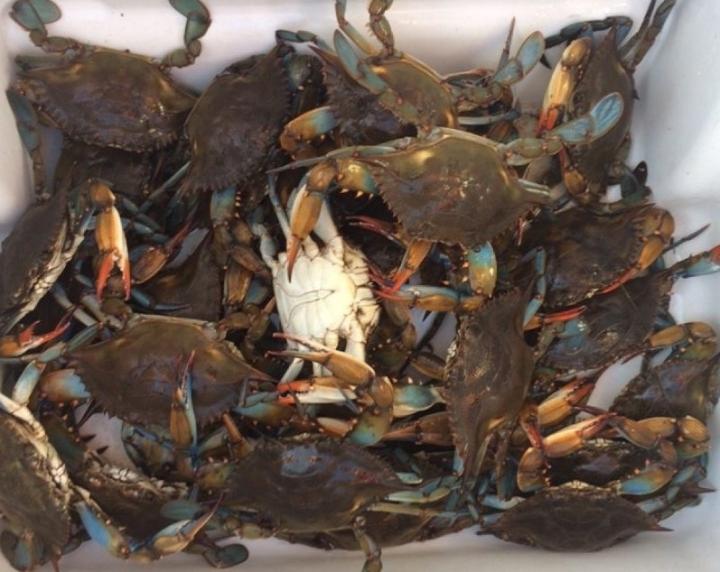 Crabbing In SouthLouisiana